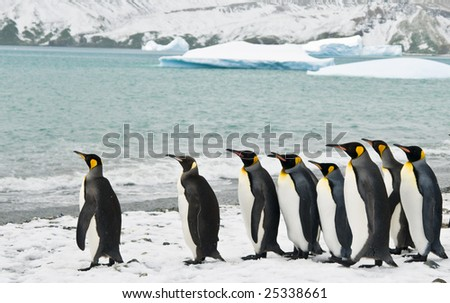 Penguins in icy bay - stock photo