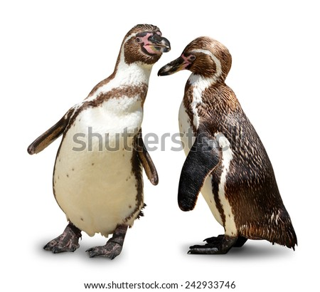 Penguins isolated on white background  - stock photo