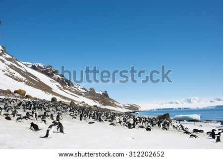 Penguins on the coast of the ocean - stock photo