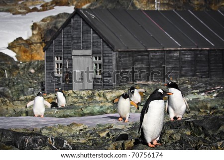 penguins on the stone coast of Antarctica - stock photo
