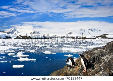 penguins on the stone coast of Antarctica, mountains in the background - stock photo