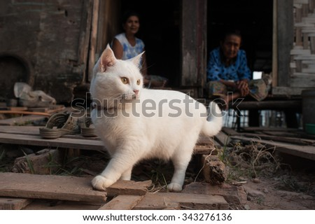 Peninsula Lanta, Thailand - January 24, 2014: Old women are sittting on the threshold of their dilapidated homes with their cats.