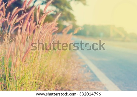 Pennisetum pedicellatum  add vintage color for background - stock photo