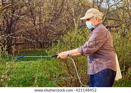 Pensioner wearing a protective mask is processing plants with insecticides in his garden                              - stock photo