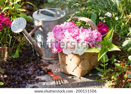 peonies in basket - stock photo