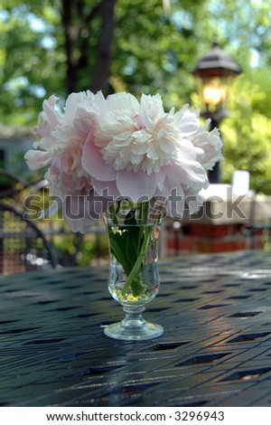 Peonies on a table by a garden with bright sunlight. - stock photo