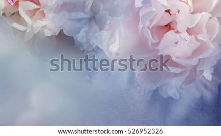 Peony flower vintage background.