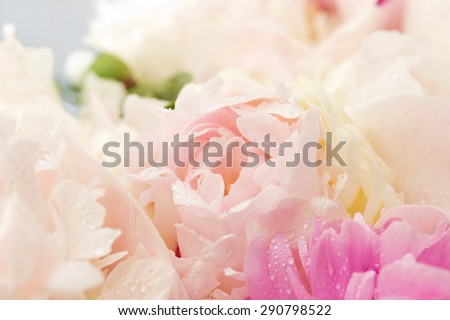 peony petals with soft focus