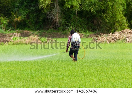 People are spraying pesticides in rice field - stock photo