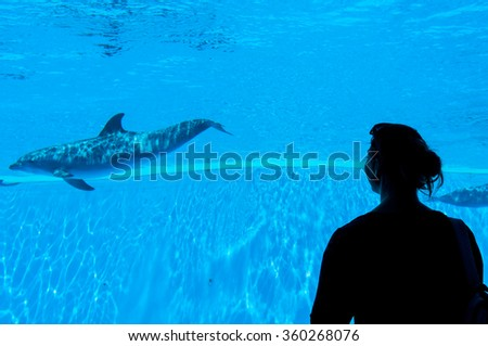 People enjoying watching dolphins - stock photo