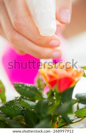 people, gardening, flower planting and profession concept - close up of woman or gardener hand spraying rose with sprayer - stock photo