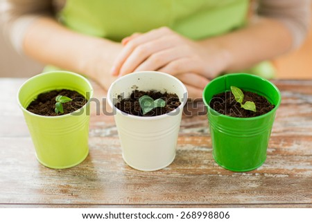people, gardening, organic, planting and profession concept - close up of pots with sprouts over gardener or woman hands at home - stock photo