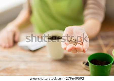people, gardening, seeding and profession concept - close up of woman hand holding and showing seeds - stock photo