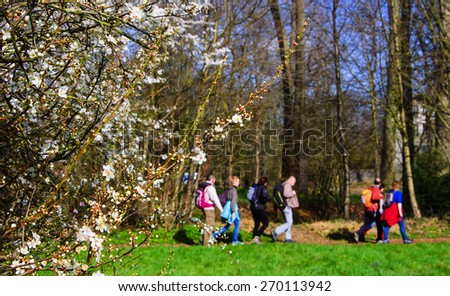 People hiking in the Vincennes forest (Paris, France) in the spring. Healthy lifestyle background. Selective focus on the blooming tree. - stock photo