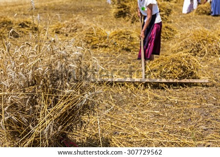 People in old times are collected mowed wheat to make a big pile of many small sheaves. - stock photo