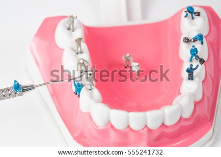 People to clean tooth model