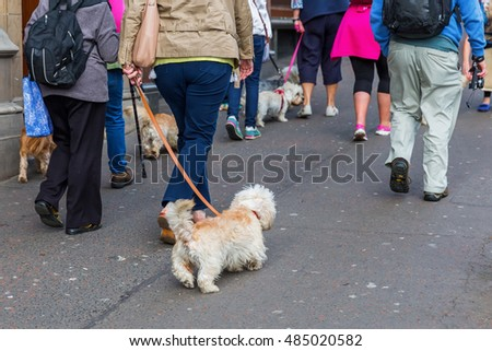 people walking with Dandie Dinmont Terrier at the leash in the city
