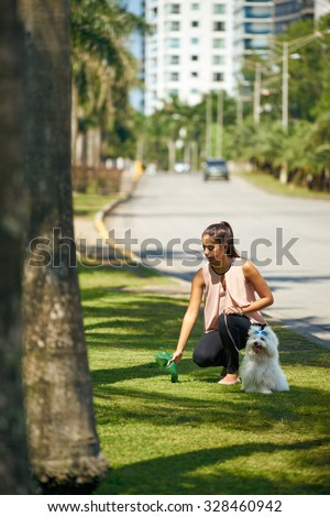 People working as dog-sitter, girl with french poodle dog in park. The young hispanic woman picks up her pet's poo with plastic bag - stock photo