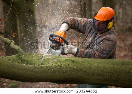 people working in the forest - stock photo