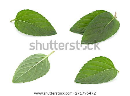 Peppermint leaf closeup isolated on white background - stock photo