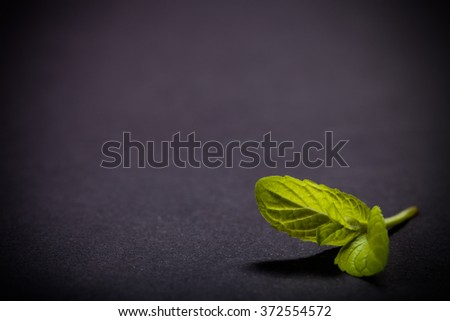 Peppermint leaf on the black slate background. Shallow depth of field. Toned.