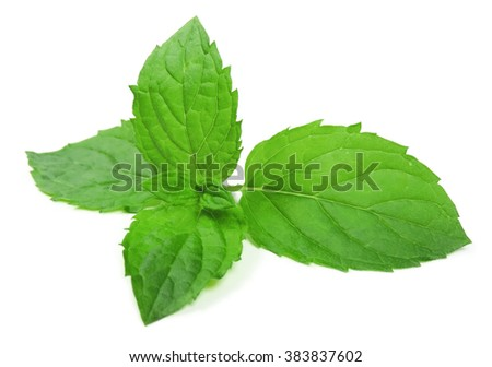 Peppermint leaves, isolated on white. Mint leaf.