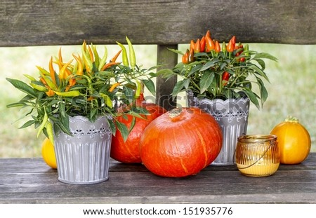 Peppers and pumpkins on wooden bench. Beautiful autumn setting in the garden on sunny day.  - stock photo