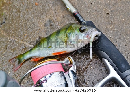 perch on a rock - stock photo