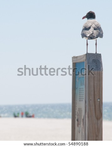 PERDIDO KEY, FL - JUNE 9: A seagull watches as BP oil spill workers (background) clean the beaches on June 9, 2010 as oil threatens the Gulf Shores National Seashore near Pensacola, FL. - stock photo