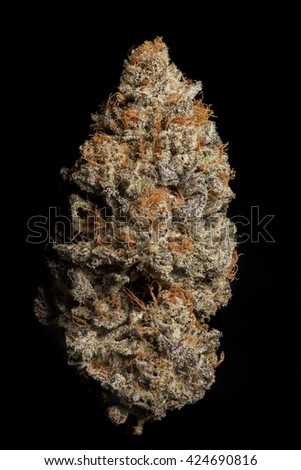 Perfect Cannabis Bud - Candyland Strain - stock photo