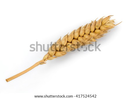 Perfect Cleaned Dried Wheat Ear Isolated on White Background in Full Depth of Field with Clipping Path.