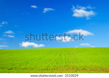 Perfect Green field and blue sky with white fluffy clouds - stock photo