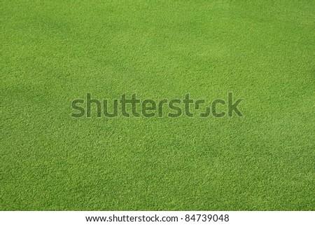 Perfect Green lawn - stock photo