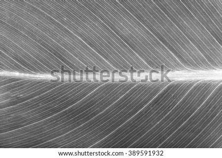 Perfect leaf texture, close up. Retro style - stock photo