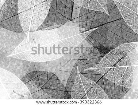 Perfect leaves texture, close up. Retro style - stock photo
