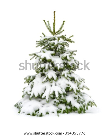Perfect little fir tree in fresh snow, for Christmas, isolated on pure white background - stock photo