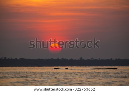 Perfect orange sunset on the Lake Maracaibo with the silhouette of a dead tree floating at the surface of the water. Venezuela 2015 - stock photo