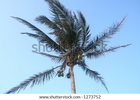 Perfect palm - stock photo