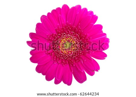 Perfect Pink Gerbera, completely isolated on white background - stock photo