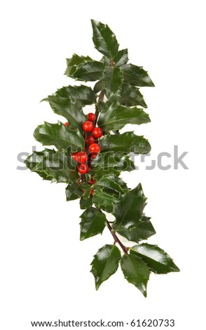 Perfect sprig of holly with red berries on white - stock photo