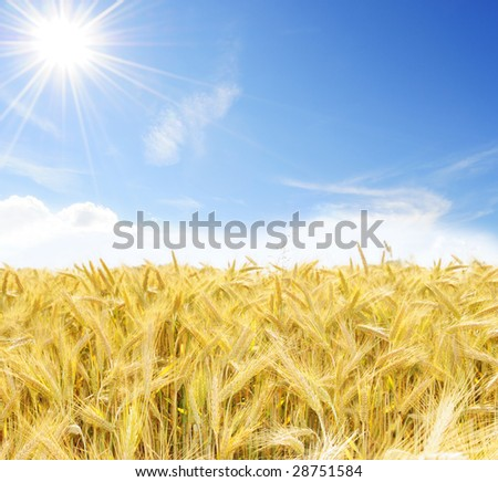 Perfect sunny day out on the oat field - stock photo