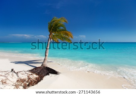 Perfect tropical white sand beach with coconut palm in Cuba - stock photo