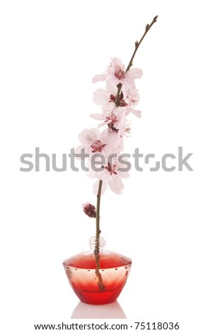 perfume bottle and cherry flower on white background - stock photo