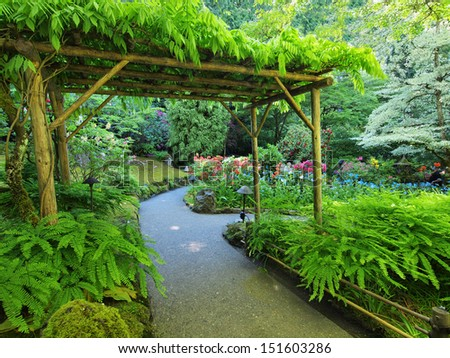 Pergola covered with climbing plants over the walkway in the lush garden - stock photo