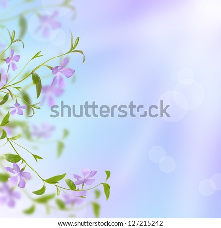 periwinkle on blue background