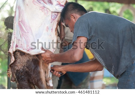 Perlis, Malaysia-September 27, 2015:Unidentified Malaysian Muslims help in halal slaughtering part of a lamb or kibas during Eid Al-Adha Al Mubarak, the Feast of Sacrifice or Qurban.