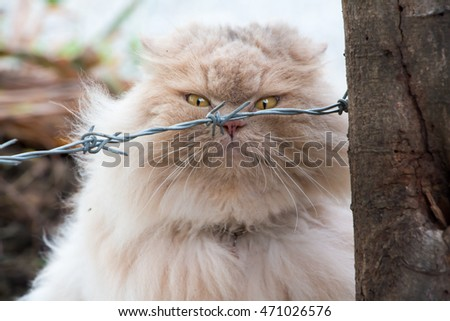 Persian cat behind the barbed wire