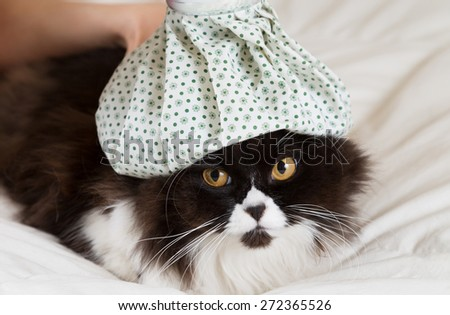 Persian cat flu and a hot water bottle on head - stock photo
