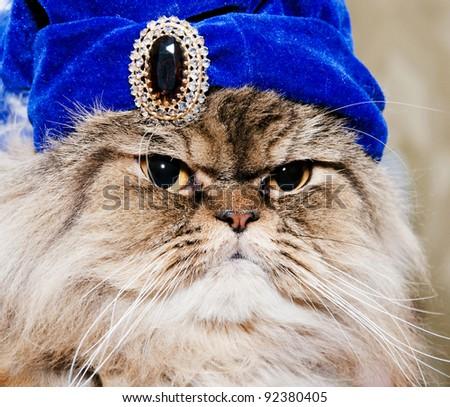 persian cat king - stock photo