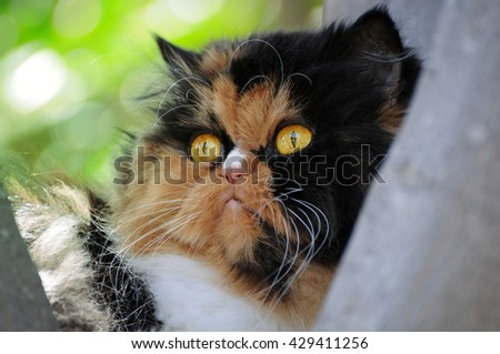 Persian cat on a tree - stock photo